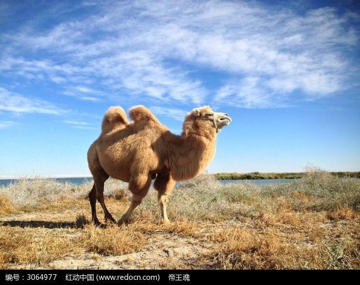 骆驼彩虹木纹瓷砖