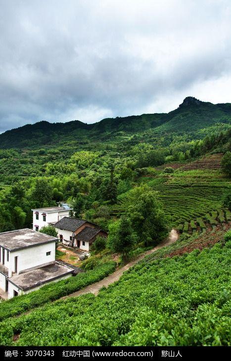 农家庭院后的上坡茶园茶园图片