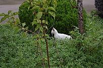 草丛中的小猫