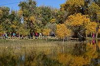 黄绿相间的胡杨树林
