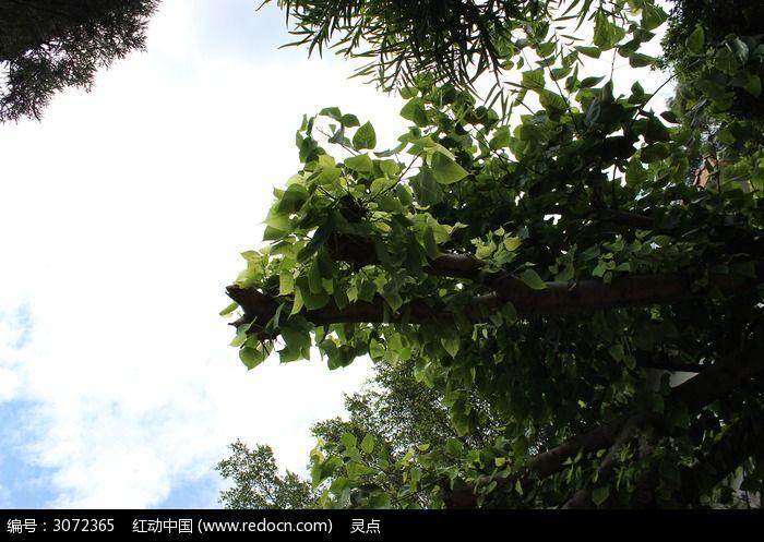 天空 茂密的树木图片,高清大图_森林树林素材