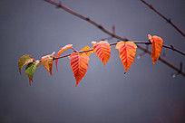 在雾中的一串树叶