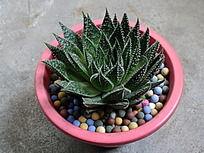 彩石装饰的多肉植物盆栽