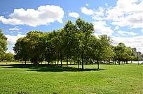 草地上的树木