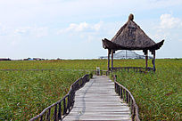黑龙江湿地保护公园无人清晰小路