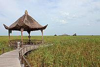 黑龙江湿地保护公园无人照片小路凉亭