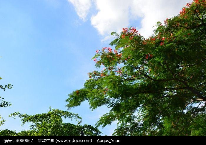 原创摄影图 动物植物 树木枝叶 树叶与蓝天