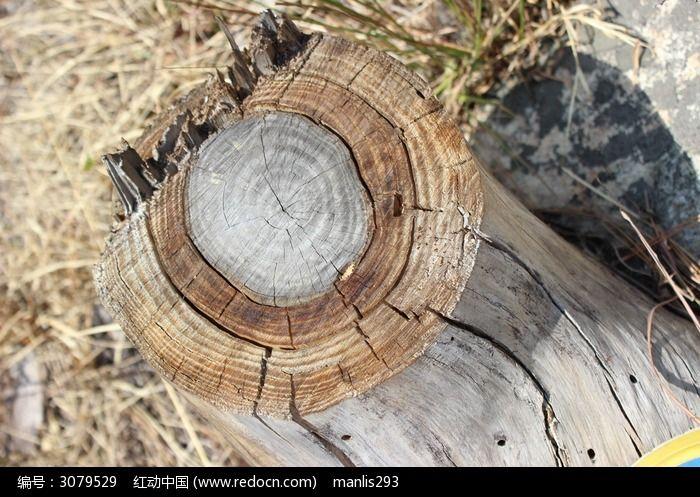 树桩树轮图片素材下载(编号:3079529)