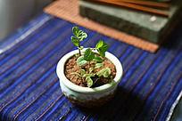 书桌上的绿色植物小盆栽