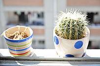 学生公寓阳台上的仙人球盆栽