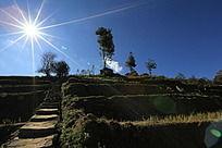 阳光下阶梯田园