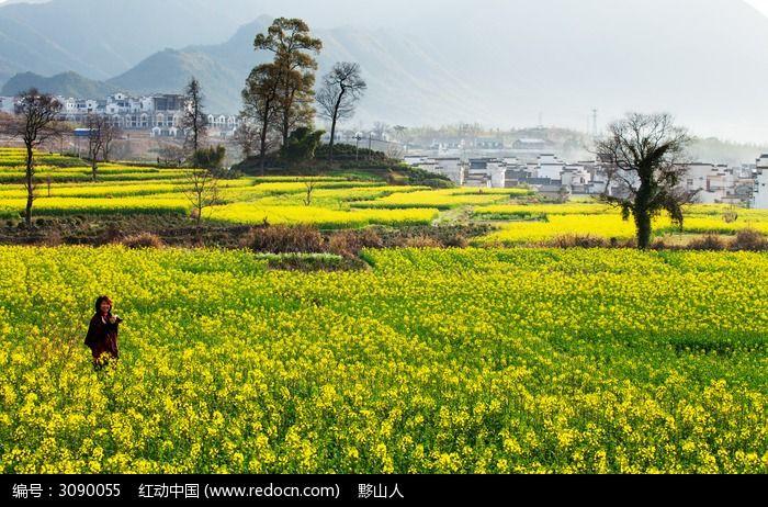 春天里的卢村图片