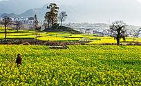 春天里的卢村
