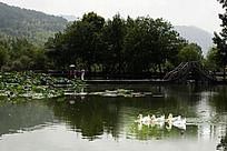 宏村南湖旅游
