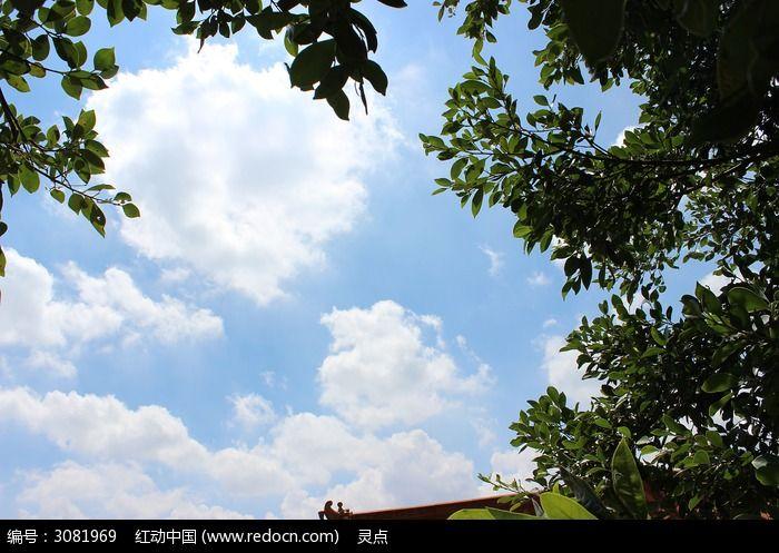 蓝天白云的树林图片,高清大图_天空云彩素材