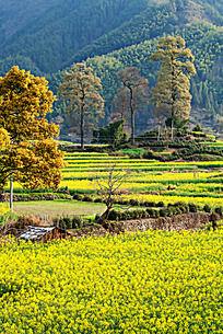 卢村的生态环境