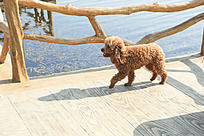 湿地栈道奔跑的小狗