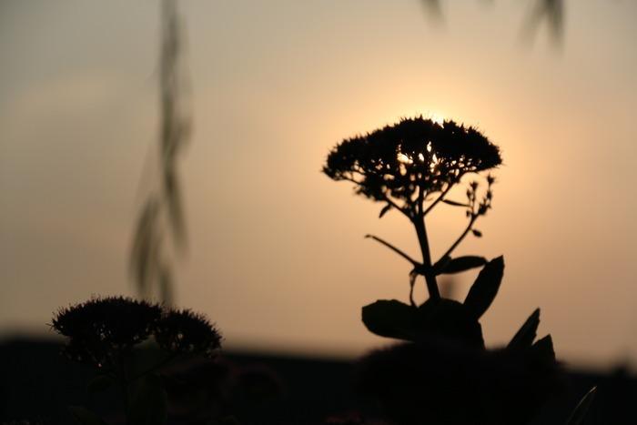 原创摄影图 动物植物 花卉花草 花朵剪影