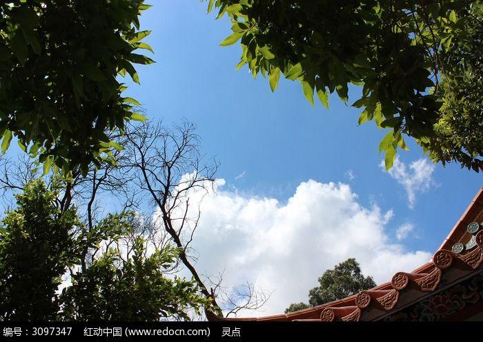 蓝天白云下的树木剪影图片_图片_红动手机版