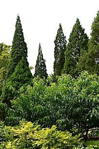 绿色的树林