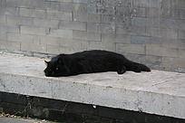 慵懒的大黑猫