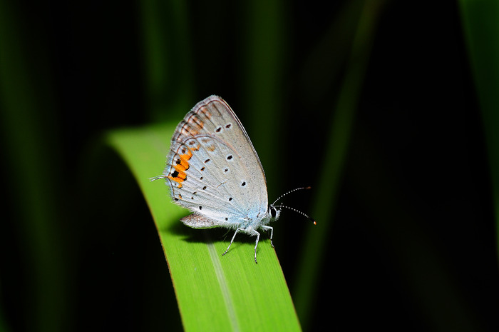 绿色树叶上的蝴蝶图片