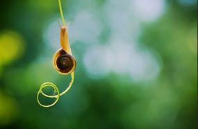 葡萄须上的蜗牛