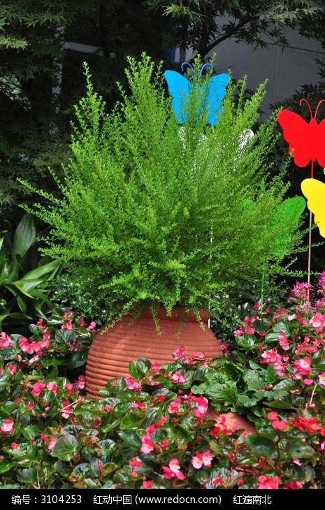 原创摄影图 动物植物 花卉花草 陶罐里生长茂盛的植物