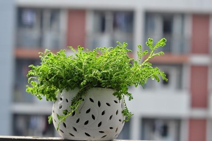 绿色小植物盆栽