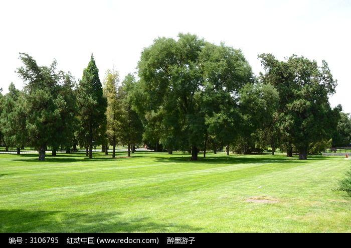 草地上茂密的大树图片