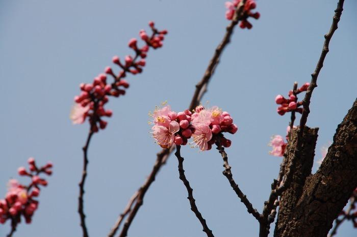 春天杏花图片_动物植物图片