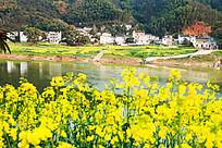 村落与油菜花相应