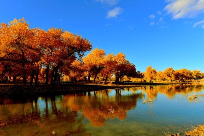 原创摄影图 自然风景 森林树林 额济纳河胡杨林倒影