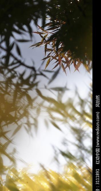风中的树叶图片,高清大图_森林树林素材