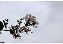 灰色天空下的白色小花