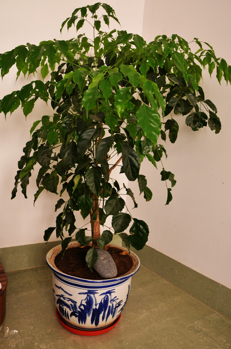 原创摄影图 动物植物 花卉花草 绿色盆栽室内图片
