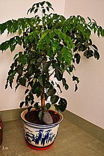 绿色盆栽室内图片