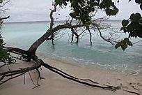 清澈海洋倒立树木