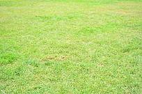 人大绿色草地植被