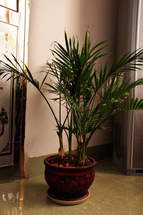 原创摄影图 动物植物 花卉花草 室内盆栽装饰图片