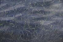 水中的海草