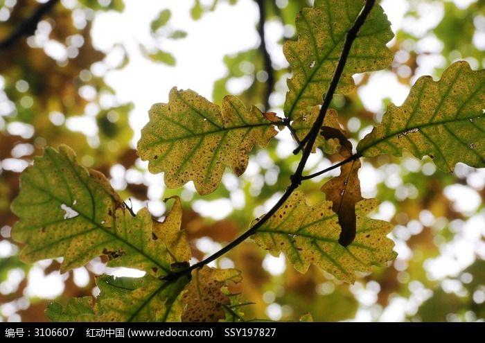树叶图片_动物植物图片
