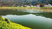 新安江与油菜花