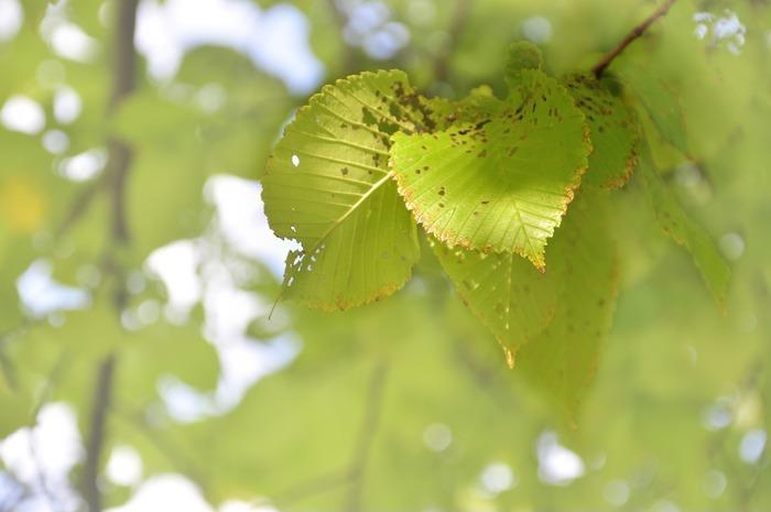 阳光下的叶子图片,高清大图_树木枝叶素材