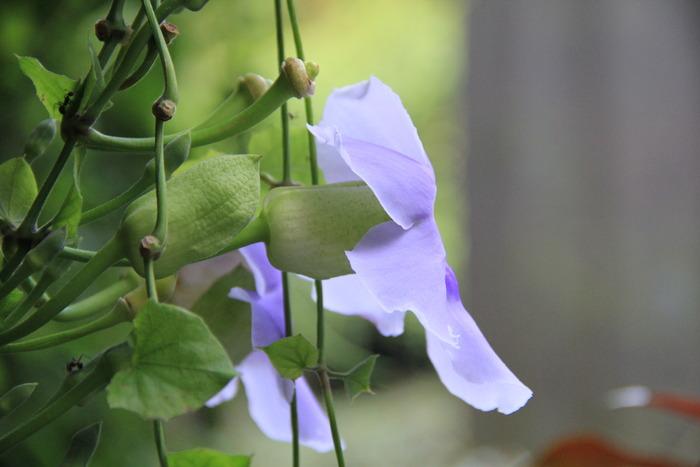 一朵漂亮的小花图片,高清大图