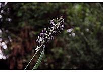 一束紫色的小花