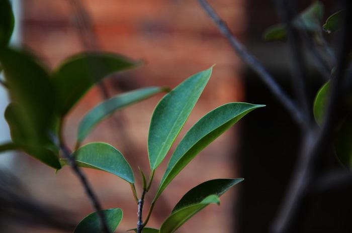 嫩绿的叶子图片_动物植物图片