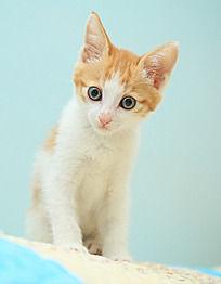 站立的小猫