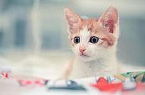 睁大眼睛的小猫