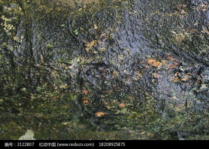 催吐萝芙木树皮贴图